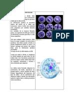 Reproducción celular (3).docx