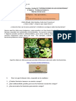 guía 2 Uni III fotosintesis 6°