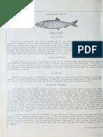 foodfishfacts_3