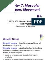 PSYN_103-_Chapter_7,_Muscular_system,_First_sem_2019-2020