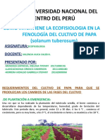 FENOLOGIA DE PAPA