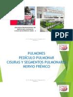 (22) SESION 22 - PULMONES - NERVIO FRÉNICO