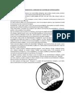 NEUROTRANSMISION EN EL CONSUMO DE SUSTANCIAS ESTIMULANTES