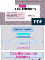 CICLO DE NITROGENO.pdf