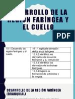 Desarrollo de la Región Faringea y Cuello Final