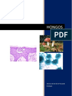 Hongos histologia