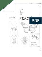 Clave de insectos 1