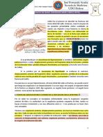 11.-TERCIO DISTAL DEL RADIO Y CUBITO