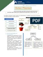 1° Reino Plantae Caracteristicas y clasificación GT.pdf