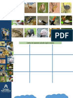 1° Reino animalia Caracteristicas y clasificacion PPT