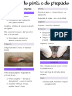 Doenças do Penis e Prepúcio