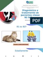 Diagnóstico e tratamento de pacientes B2 felinos