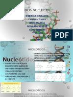 ácidos nucleicos expo