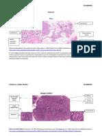 Tarea imagenes inmune arreglada-convertido.pdf