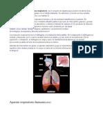 Sistema respiratorio.odt