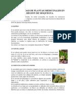 BIODIVERSIDAD DE PLANTAS MEDICINALES EN LA REGIÓN DE MOQUEGUA