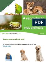 Unidade 9 A reprodução nos animais.pptx