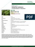 sassafras-albidum-pdf-5309-de