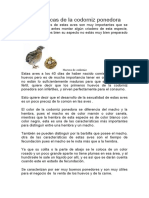 5 Características de la codorniz ponedora
