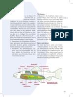 Artenkunde2.pdf