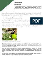 Fertilizante e Insecticidas Caseros