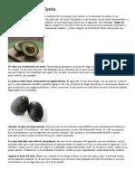 Huerto - Aguacate
