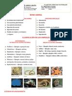 4 REINO ANIMAL CUARTO 2020.docx