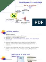 Arco Reflejo Placa Mioneural