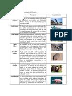 Especies_en_peligro.pdf