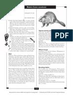 Beaver Control