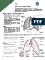 Vísceras Tórax, Pleuras, pulmones, mediastino y Pericardio