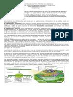 125193982-Guia-4-Metabolismo-en-Plantas-1p-7-2013