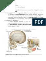 FOSA TEMPORAL INFRATEMPORAL, ATM Y PTERIGOPALATINA