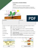 CIENCIAS NATURALES-NUTRICION AUTOTROFA