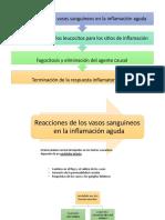 clase 8. Inflamación 2da parte PDF