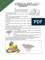 ACTIVIDAD 13 Comparemos a la codorniz con la gallina (1)