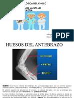 morfofisiologia (1).pptx