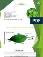 botanica-hojas-diapos
