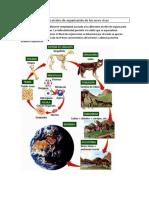 Actividad N°2 niveles de organizacion de los seres vivos