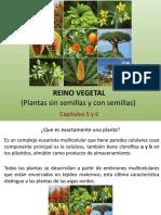 5 y 6. Reino Vegetal.pptx