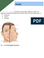 Anatomie cranio-faciale