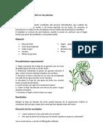 produccion_almidon_plantas.pdf