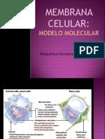 Aula 6 Membrana Celular.pdf