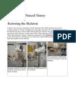 2. Restoring the Skeleton , Santa Barbara