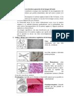 Cuestionario de hongos y actinomicetos
