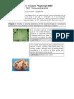 Fitopatología Primera Evaluación Práctica 2020-I (Reparado)
