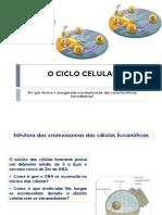 CICLO-CELULAR_b7b7b282b59c83bc8c771d78c022c5ab.pdf
