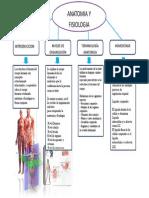 anatomia ...doc