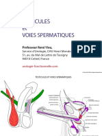 TESTICULES ET VOIES SPERMATIQUES.pdf