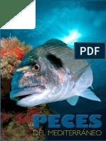 Peces del mediterraneo